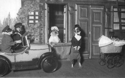 Los perros comediantes viajan en automóvil