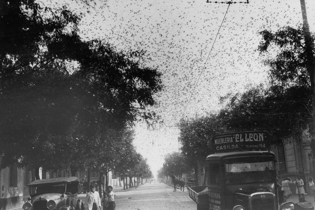 Invasion langostas Rosario